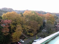2011-11-29-kouyou1